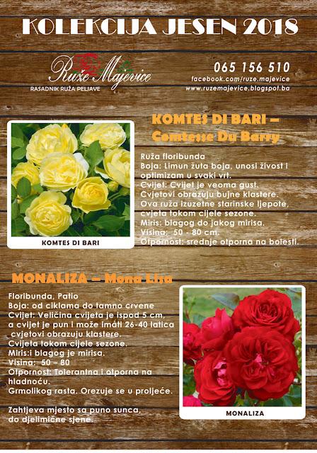 Žuta ruža Komtes Di Bai i crvena ruža Monalza