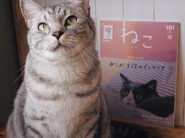 1月12日に発売された雑誌「ねこ」とサバトラ猫