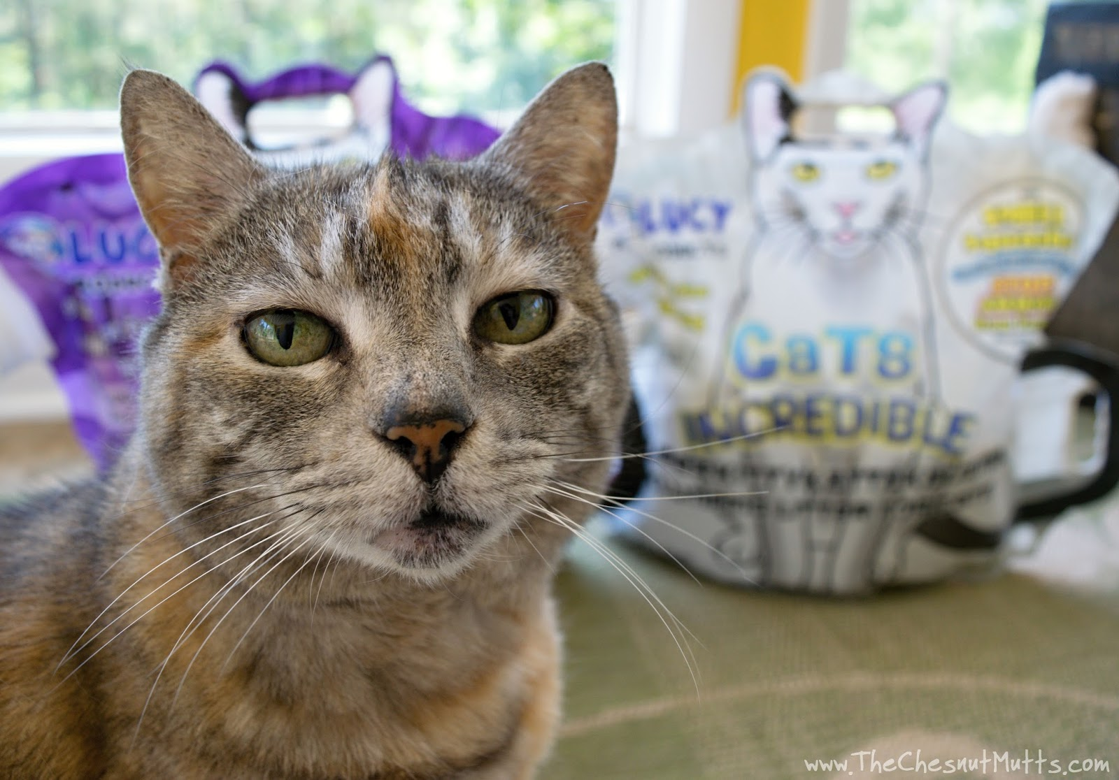 Review Amp Giveaway What Makes Lucy Pet Products Cats