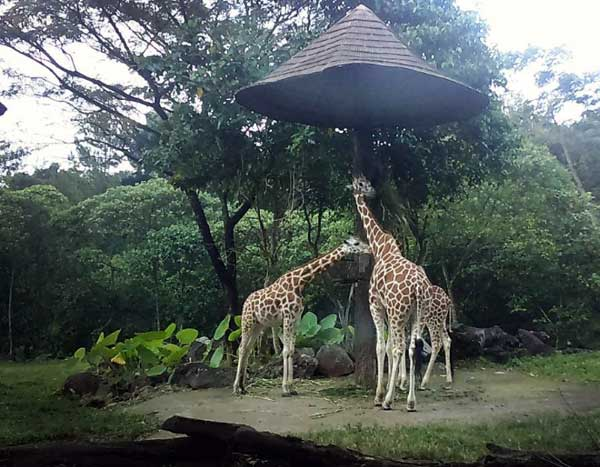 Taman Safari Indonesia 2