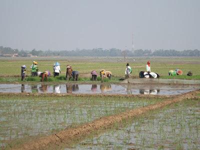 UPTD Pertanian Sarankan Coret Kelompok Tani Tidak Aktif