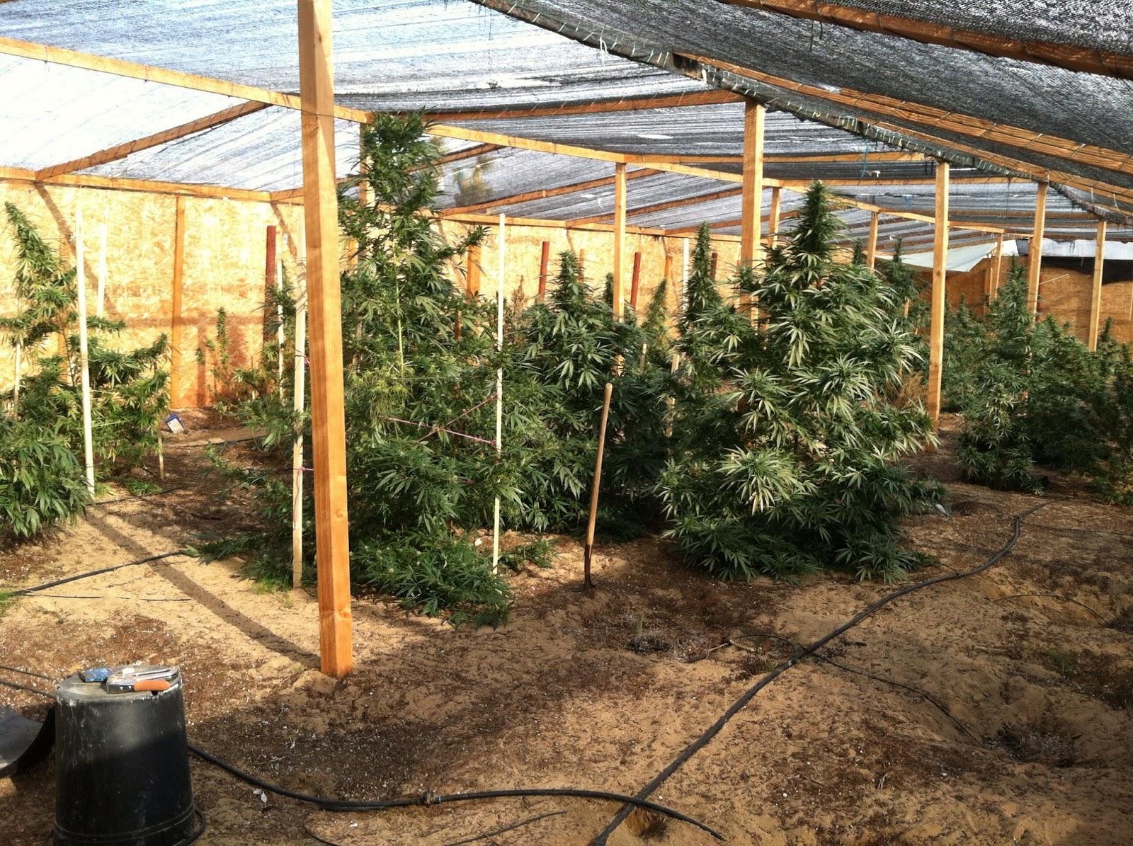 Grow Tip Secured Outdoor Growing By Ben Horner