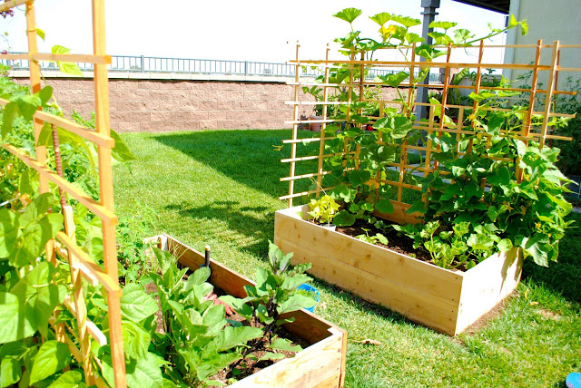 Vegetable garden in small spaces bahay ofw for Fruit and vegetable garden design
