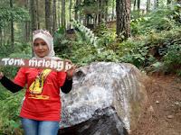 Tempat Wisata Baru Gobang Green Pinus Wisata Di Cianjur