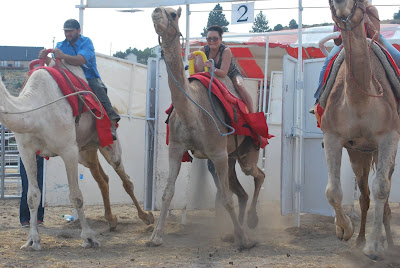 Camel Racing in Virginia City