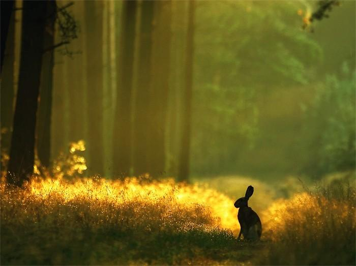 woods forest animal rabbit