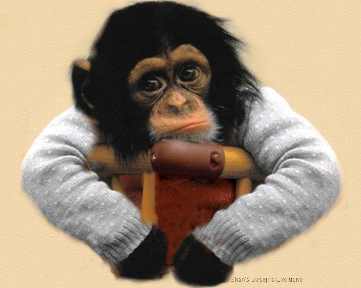 Alans Allotment Sad Monkey Face Today
