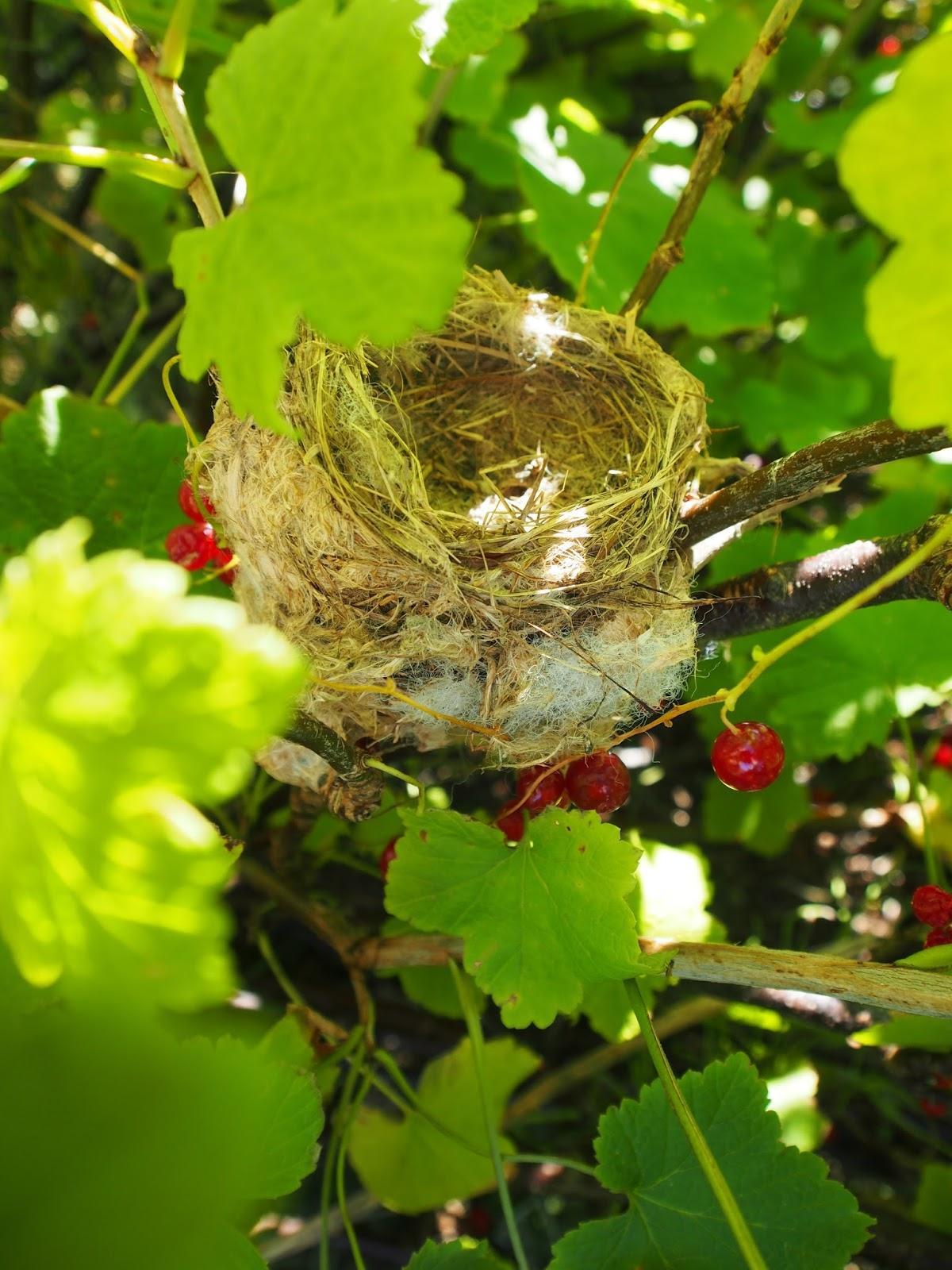 Our island home for Un petit oiseau