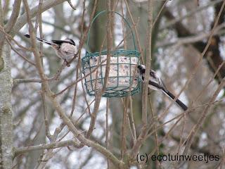 Vetbol maken voor vogels, met of zonder frituurvet, vogels voeren, staartmezen
