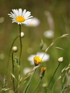 Thấy gì từ loài hoa dạ