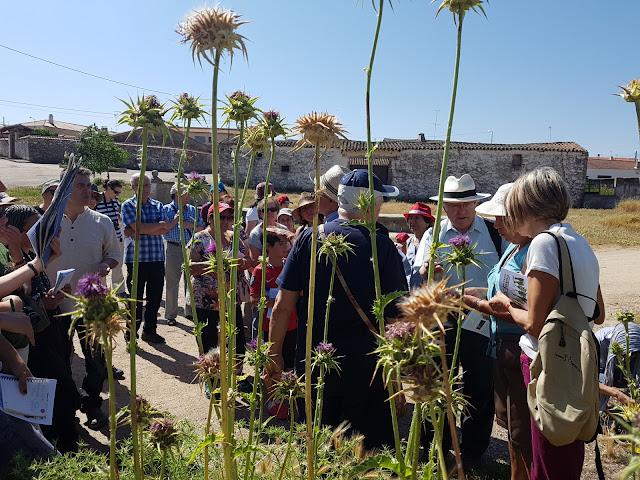 Juzbado, botánico, ana y augusto krause, 2018