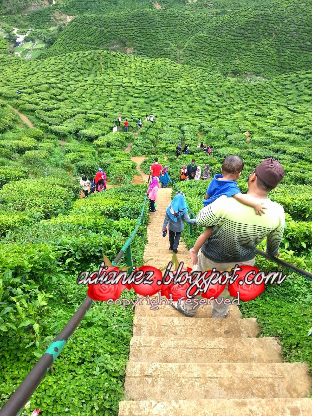 FINALLY, SINGGAH SEKEJAP ~ LATA ISKANDAR & BHARAT TEA PLANTATIONS (CAMERON VALLEY)