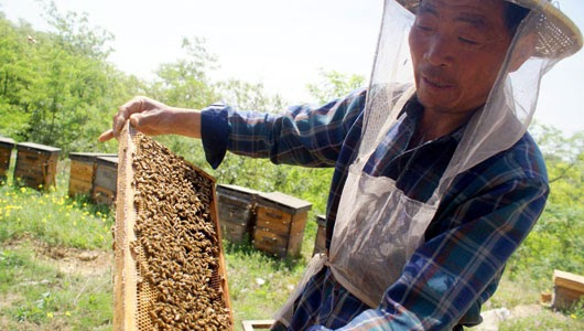 Jiyuan China  city images : Strathcona Beekeepers: Chinese Laundered Honey