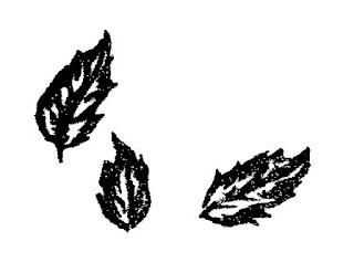 leaf botanical illustration image