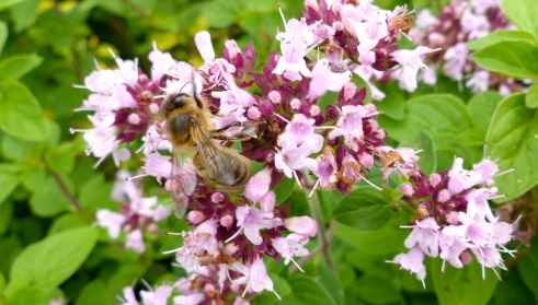best plant for attracting bees