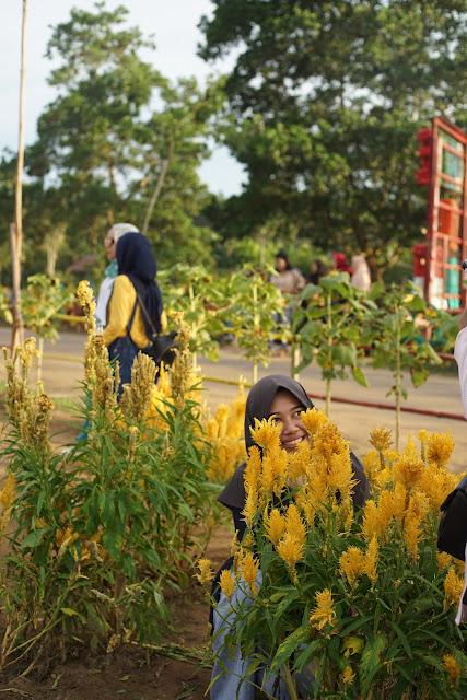 Pengunjung Rajati Flower Garden Selfie di balik bunga