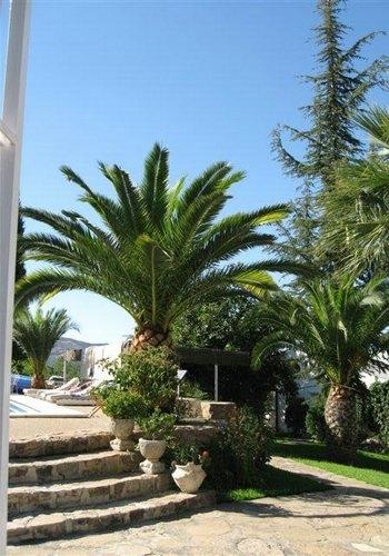 Palma robelina reproduccion asexual de las plantas
