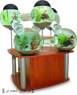 اغرب احواض السمك في العالم
