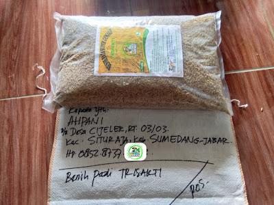 Benih pesanan AHPANI Sumedang, Jabar.   (Sebelum Packing)