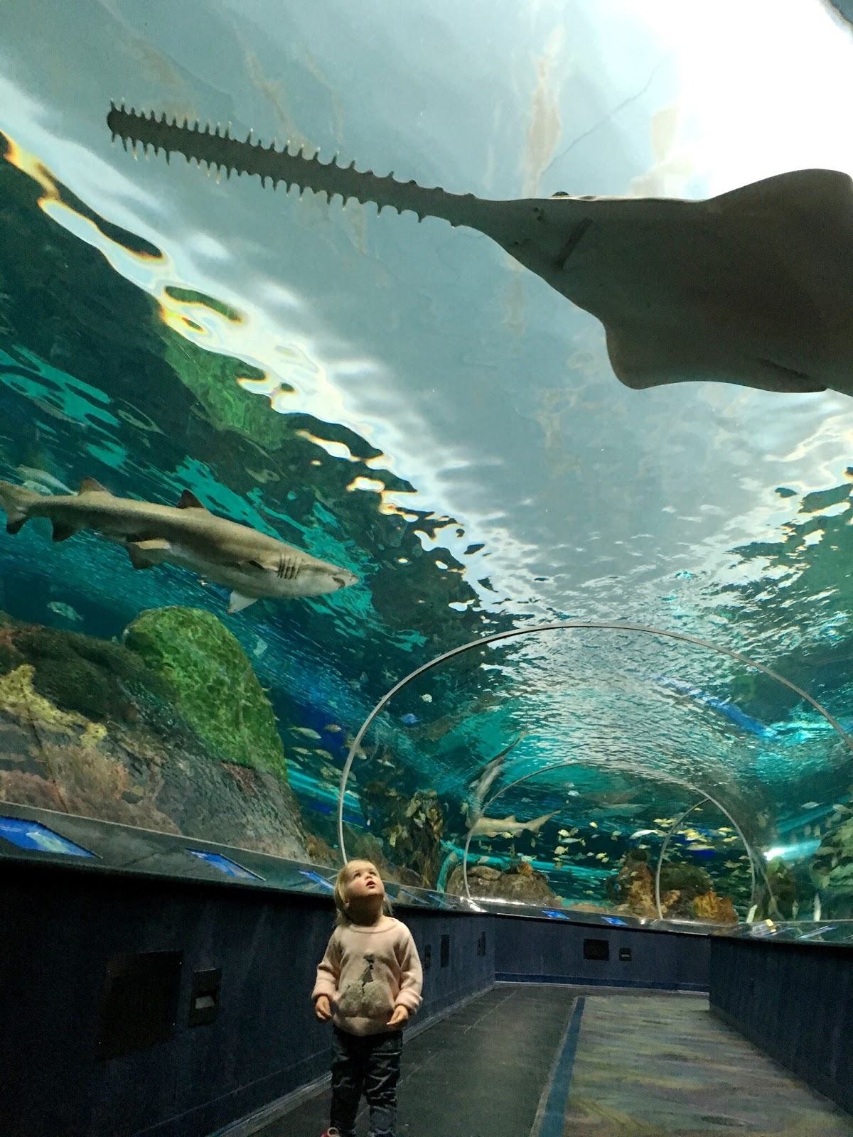 Toddler in Ripley's Aquarium of Canada's Dangerous Lagoon Tunnel