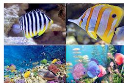 SMK Jurusan Agribisnis Ikan Hias