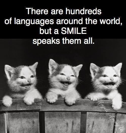 Cats smiling a spreading a message on Smile