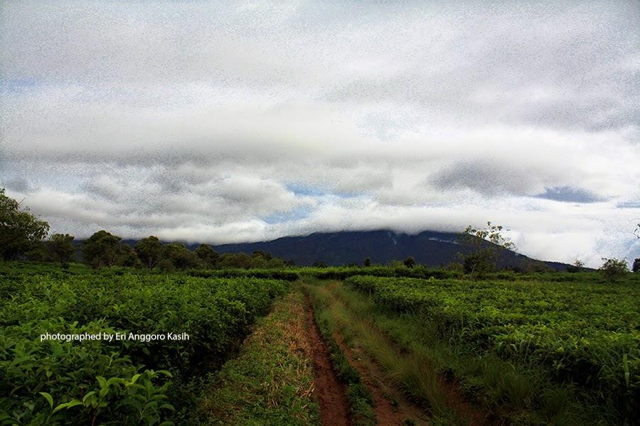 Foto Gunung Gede Pangrango tertutup awan dilihat dari Selabintana-Sukabumi.