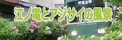 江ノ電とアジサイの風景