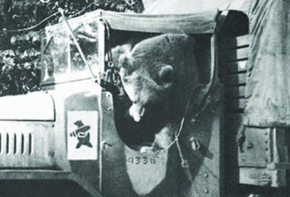 Wojtek mengendarai kendaraan militer
