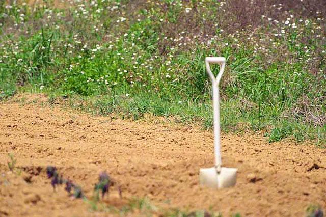 agriculture, gardening,spade, Okinawa, Japan