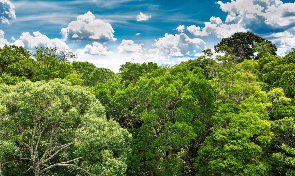 73 Million Trees Will Be Planted In The Most Extensive Reforestation Project