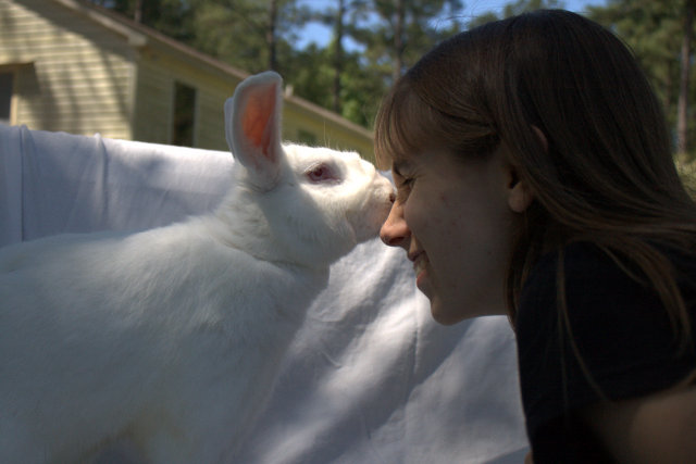 Randy rabbit dating