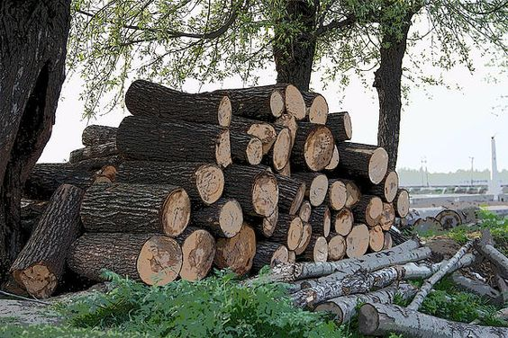 Cut tree trunks piled up for further processing after logging - Prints on Fine Art America