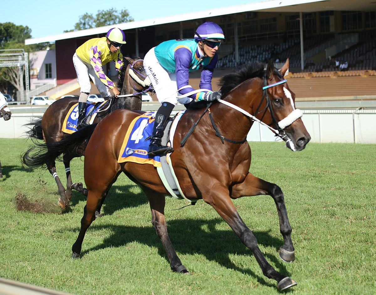 Head Honcho - Ridden by Keagan de Melo - Trained by Andre Nel - Horse Racing - Scottsville