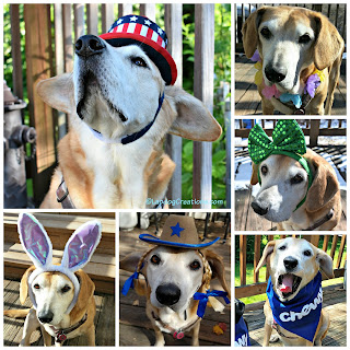dog senior rescue adopt hound costume holidays