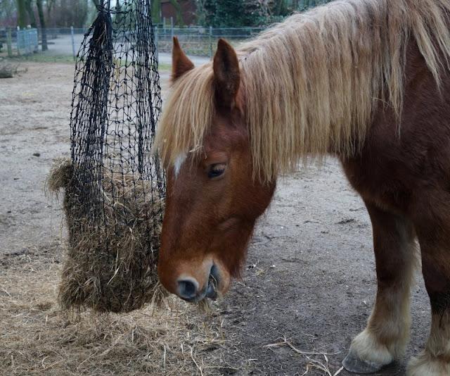 Tierpark Neumünster Pferd Pferde Kaltblüter Kinder Familie Herbst Winter Frühjahr