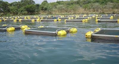 compra tanques rede para criação de peixes