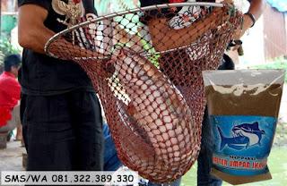 Umpan Serbuk Ikan Lele Harian
