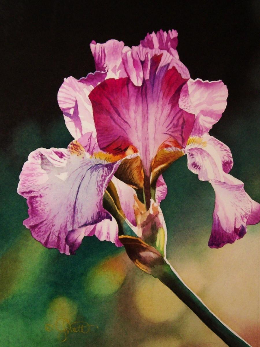 Contemporary realism iris pink white iris pink white izmirmasajfo
