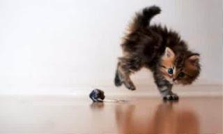 Gambar Wallpaper Kucing Lucu Banget 200013
