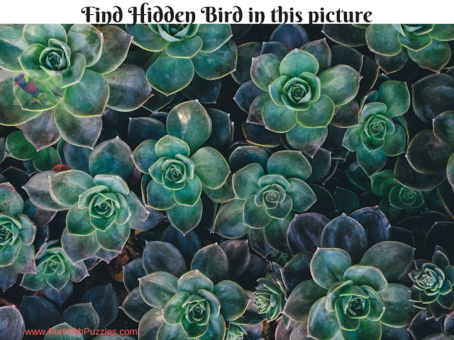 Hidden Bird Picture Puzzle