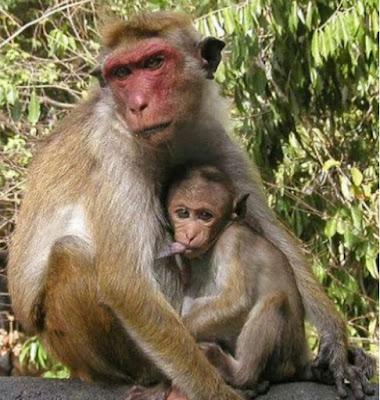 Monkeys swallow N70m belonging to Northern Senators Forum...lol