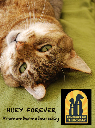The amazing survival story of Huey the cat
