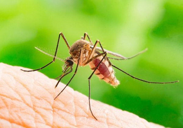 Eνημέρωση των πολιτών για τον ιό του Δυτικού Νείλου από την  Γενική Γραμματεία Δημόσιας Υγείας