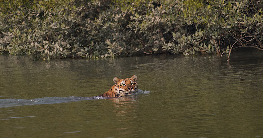 Sunderbans -  13th to 18th, January, 2017