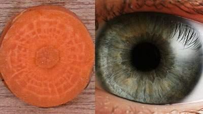 Keajaiban Wortel, Mirip Lensa Mata dan Berkhasiat untuk Mata, penampang wortel dan lensa bola mata