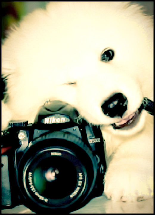 "Sami, the professional  photographer pupper dude asks that you ""Smile! Please, don't cry anymore!"" #adorable #animals #dogs #photography #relatable"