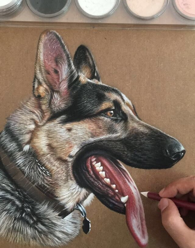 17-German-Shepherd-Dog-Ivan-Hoo-Animals-Translated-to-Realistic-Drawings-www-designstack-co