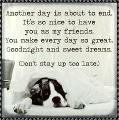funny good night message with dog image