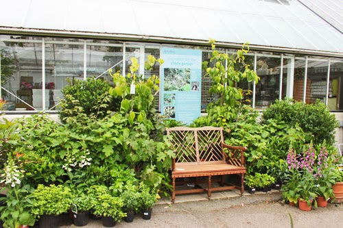 Clifton Nurseries